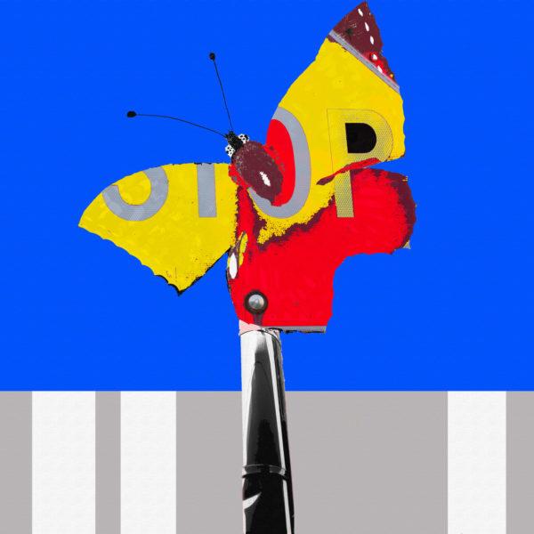 Crossing Butterfly